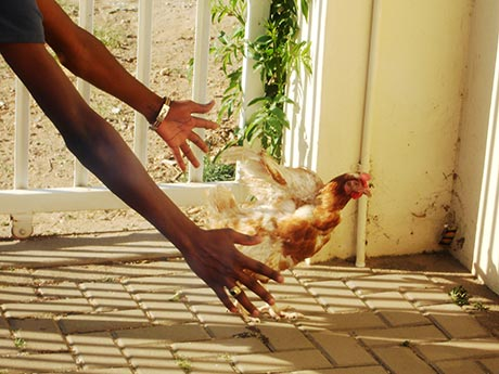 Marjory Kaizemis Story about the Chicken Dish in Namibia